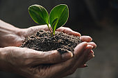 hand holding of soil with young plant on top it will growing up to the forest in future.