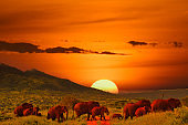 Elephants and sunset in Tsavo East and Tsavo West National Park in Kenya