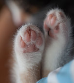 white kitten Cuddle paw pads