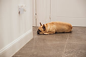 Tired Cute Pooch