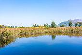 Wetland of NAM SANG WAI