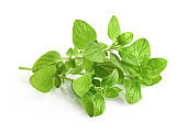 Seasonings, fresh oregano leaves
