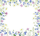 Watercolor frame of wild forest flowers