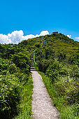 Footpath in forest park at Hong Kong