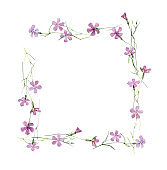 Watercolor square thin frame of wild carnations.