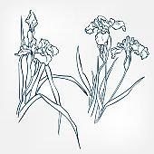iris japanese paint style design sketch design element vector