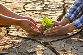 Stop climate change and global warming together