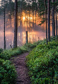 Scenic forest landscape with beautiful misty sunlight through to forest at summer morning in Finland