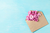 Spring pink cherry blossoming flowers in envelope on blue background. Minimal spring concept. flat lay. top view