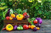 Fresh harvested vegetables. Pepper, tomatoes, cabbage, eggplants, salad, onion and basil in wooden box
