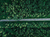 pine forest with the road aerial shot. top view of green trees from drone
