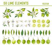 Vintage Lime Design Elements. Citrus Fruits, Flowers, Leaves, Lemons Illustration Set. Watercolor Vector Style Limes. Lemon Bouquetes for Wedding, Decoration, Birthday, Scrapbook
