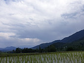 Landscape green beauty paddy fields,  nature landscaping. Plants green lands and crop fields looks beautiful summer and spring time . Greenery, water, hills. sky, sun and clouds in natural beauty.