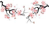 Japanese cherry sakura tree Isolated background. Branch with blossom flowers. Vector