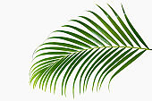 abstract green leaf texture, nature background, tropical leaf