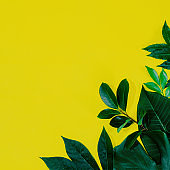 Tropical leaf frame on green background with copy space. Flat lay. Top view. Summer or spring nature concept