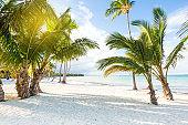 Coconut palm trees at pristine bounty beach