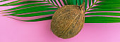 Coconut and palm leaf on color pink background