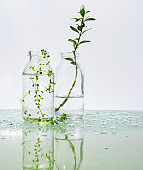 several glass vessels with perfumed water and flowers on a mirrored table