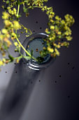 Blurry yellow flowers from lady's mantle (Alchemilla) in a glass vase on a dark gray background, unusual abstract perspective and focus on the star-shaped seeds in the water, view from above