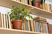 Indoor flowers on the bookshelves