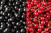 Background of red and black currants. Fresh berries closeup. Top view. Background of fresh berries. Various fresh summer fruit. Immunity system improvement. Antiviral treatment. Coronavirus prevention