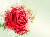 Abstract colorful shape on red rose flower watercolor illustration painting background.