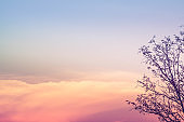 Dry tree of branch nature over orange pink color sky sunset twilight evening time