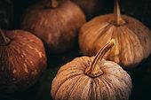 Autumn background with pumpkin. Thanksgiving day background