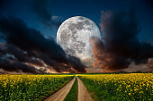 Meadow at night in full moon light
