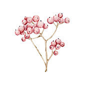 Watercolor floral berries for decoration