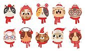 Winter cats in scarf and hat. Cute pet wearing Christmas accessory as earmuffs and party santa hats, kittens