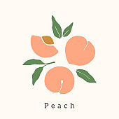 Stylish Peach vector design. Contemporary art print. Abstract hand drawn peach fruit and leaves for postcards, print, posters, covers, etc.