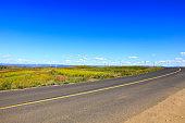Asphalt road and wind turbines