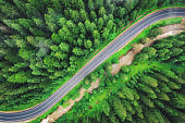 Aerial view of road in beautiful green forest at sunset in summer. Colorful landscape with roadway, pine trees, river in Carpatian mountains. View from drone of curve road. Travel in Ukraine. Top view