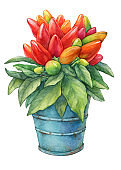 Hot chili pepper (Capsicum annuum plant) with red fruit in blue metallic flower pot. Watercolor hand drawn painting illustration isolated on a white background.