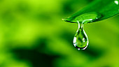 fresh green leaf with water drop, relaxation concept