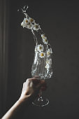 Wineglass with chamomiles flowers and water splashes in hand. Minimal style.