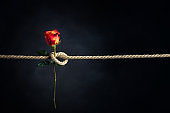 Red rose is tied with a rough rope. The concept of slavery or hostage, restriction of freedom.