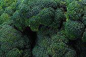 Fresh tasty broccoli background.