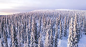 Aerial view from drone of frozen snowy peaks of endless coniferous forest trees in Lapland National park environment, bird's eye top view of famous natural landmark in Riisitunturi on winter season