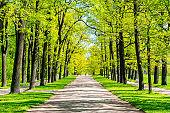Oak alley in Catherine park in spring, Tsarskoe Selo (Pushkin), St. Petersburg, Russia