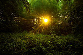 Sunrise in a clearing in the green forest