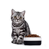 Silver tabby junior cat on white background