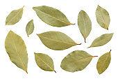 Bay leaf isolated on white background. Set of laurel leaves isolated on white background, top view. Dry bay leaf, flat lay, top view. Dry bay leaves isolated on white.