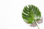 Juicy green monstera palm leaves on paper background.