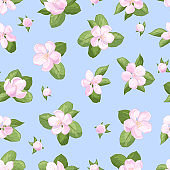 Seamless pattern with apple blossoms on a blue background