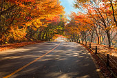 Autumn landscape. Colorful maple tree tunnel and road. Naejangsan National Park, South Korea.