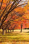 Autumn landscape. Park with colorful maple trees. Naejangsan National Park, South Korea.
