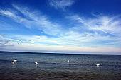 Polish Baltic Sea beautiful blue sea waves ocean horizon sand and beach blue sky white birds swans at sea